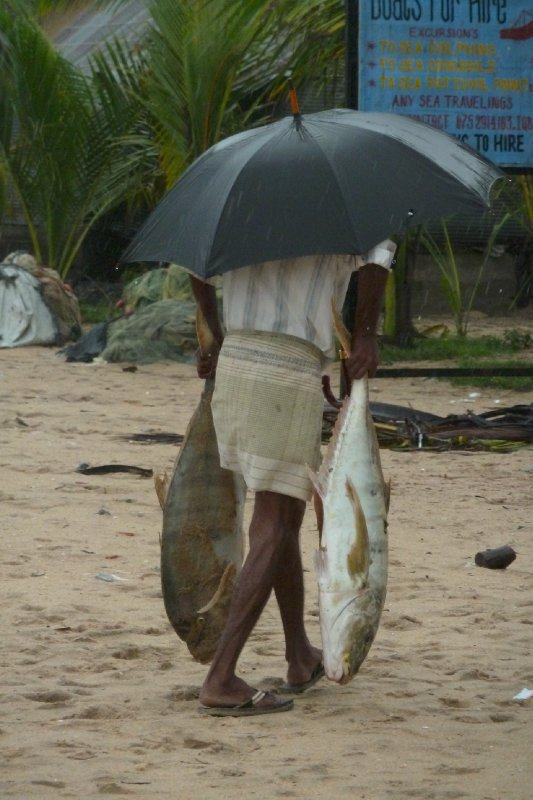 Good weather for fish