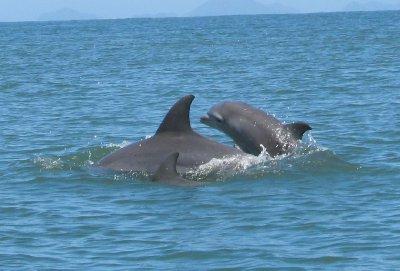 Dolphins between Livingston and Playa Blanca