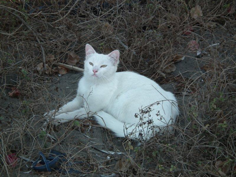 Tranquilla the cat