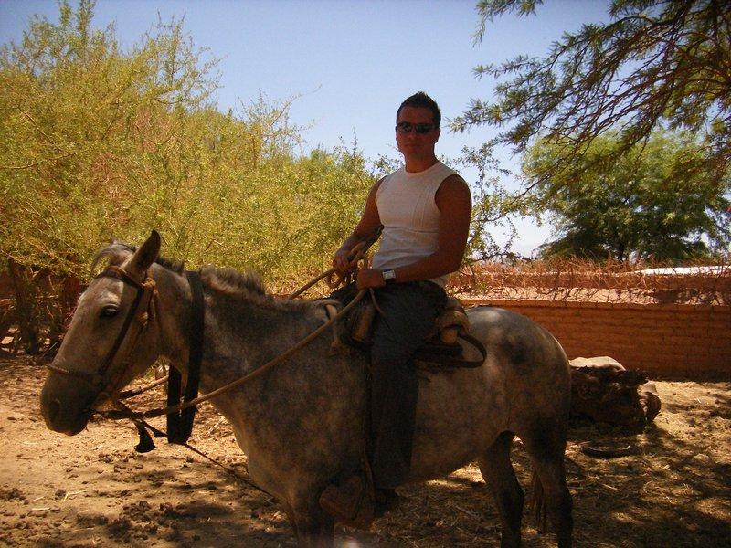 Sanpedro Horse