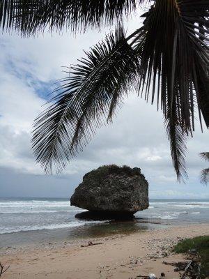 Bathsheba beach1