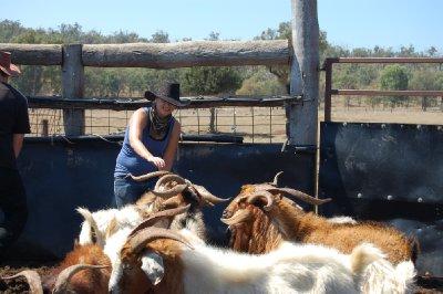 catching_goats_1.jpg