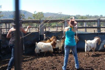 catching_goats_2.jpg