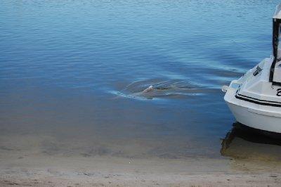 dolphin_1.jpg