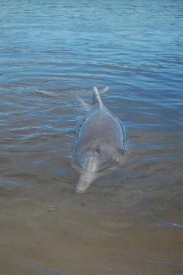 dolphin_5.jpg
