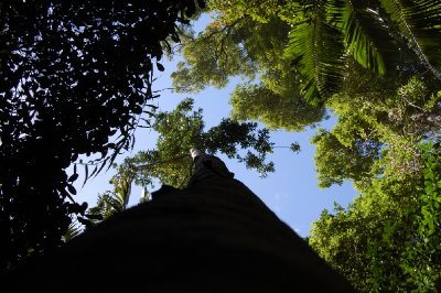rainforest_view1.jpg