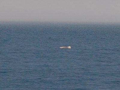 spotthing_dolphin_2.jpg