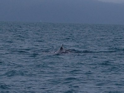 whale_spotting_2.jpg