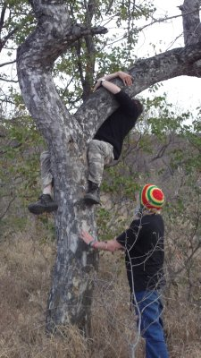 Tree climbing competition