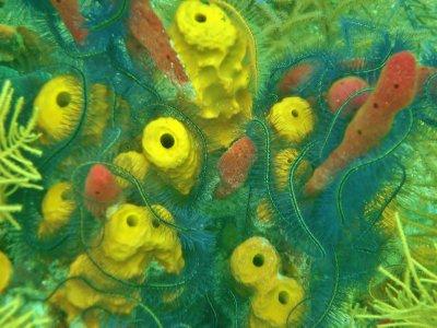 Lots of bright corals