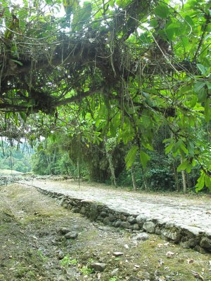 The ancient cobblestone streets that remain intact at Guayabo National Park