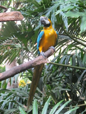 Beautiful Macaw at the Zoo Ave bird sanctuary
