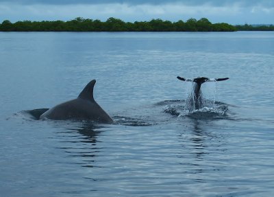 The dolphins putting on a show