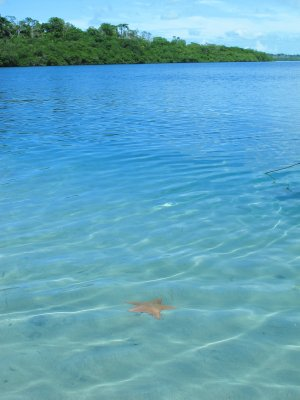 Crystal blue waters full of starfish