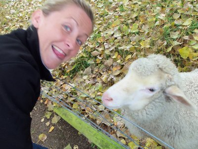 Kel with Sheep on Glenmac Farm