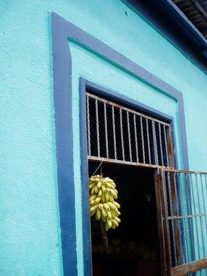 Bananas in Rio Caribe