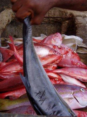 Fish market in Rio Caribe