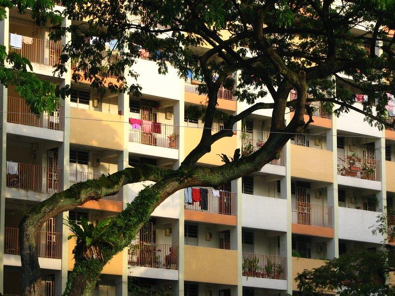 Urban greenary - Singapore