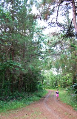 Walking trails and pine trees