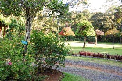 Eden's floral delight
