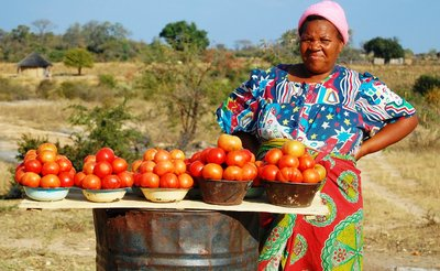 Huge, ripe tomatoes sold along the roads in Bulawayo.