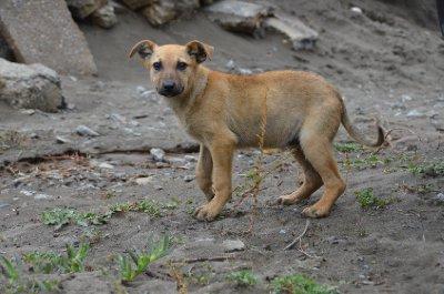 Puppy Monty