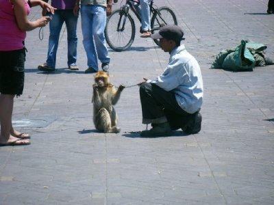monkey-bus..-square.jpg