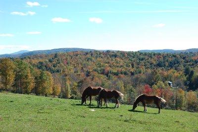 Sugarbush Farm - Horses in the Pasture