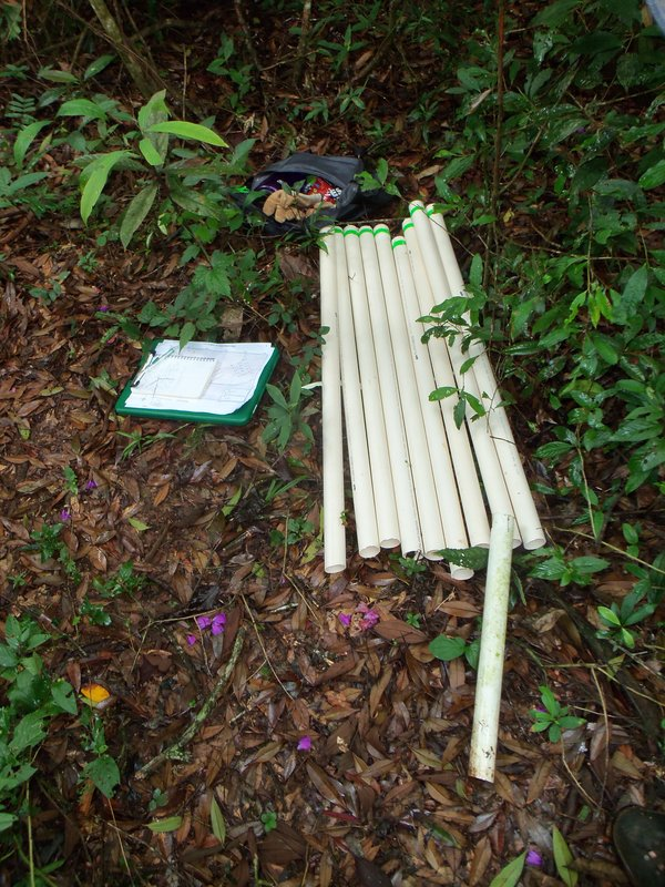 Forest monitoring plot stakes