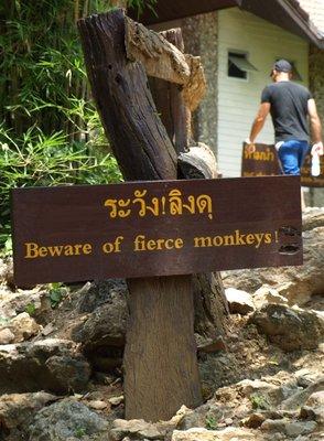 Beware of the Monkeys