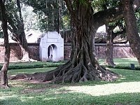 Temple of Literatures Tree