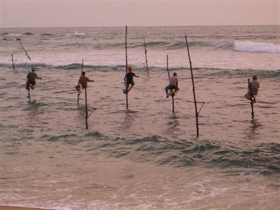 Stilt Fishermen at Weligama