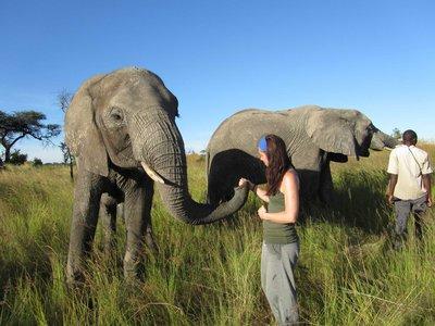ElephantHerding.jpg