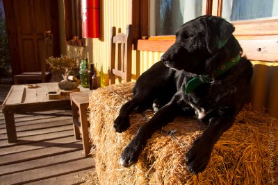 Hostel dog lounging outside our cabin