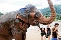 elephantbath.jpg
