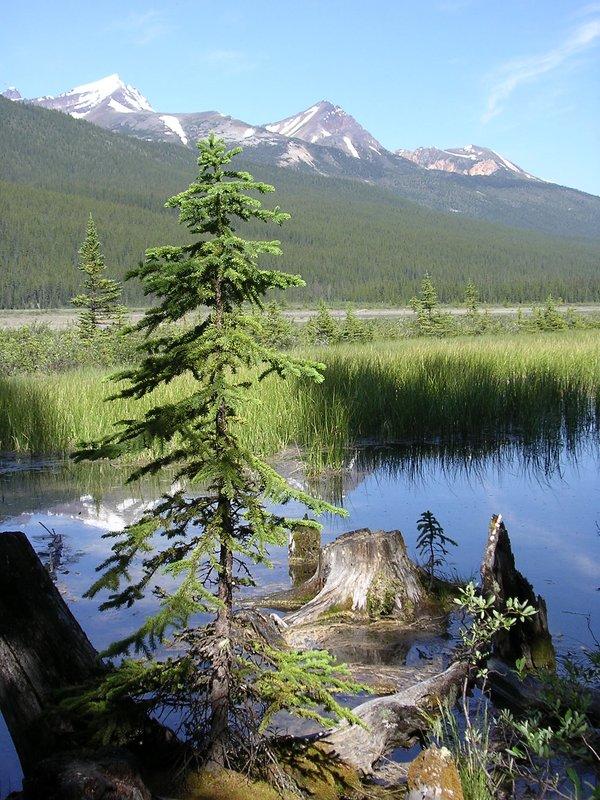 Beauty Creek, Jasper