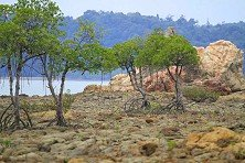 Rugged scrubland off Tanjung Resang