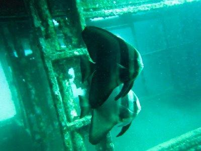 46_wreck_fish.jpg