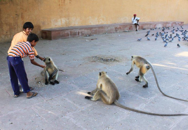 large_18_boy_monkey.jpg