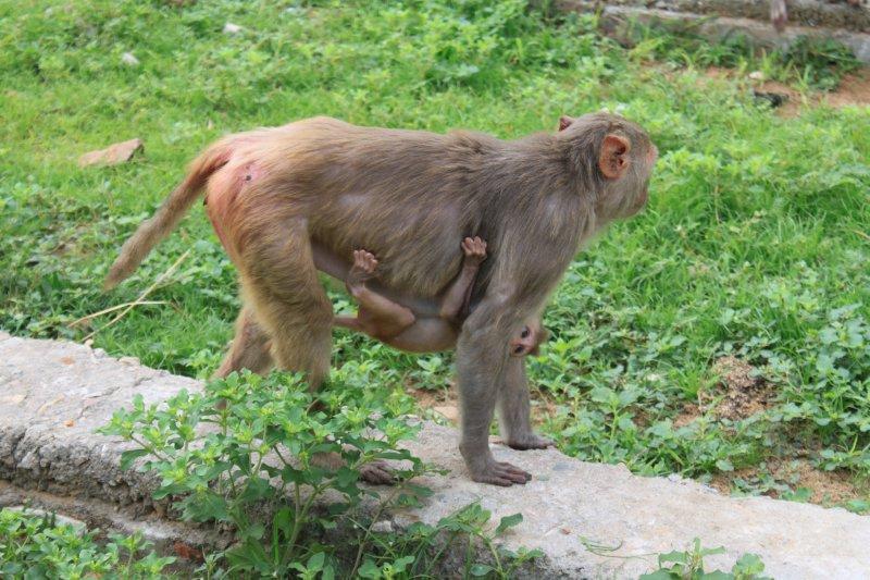 large_1_monkey.jpg