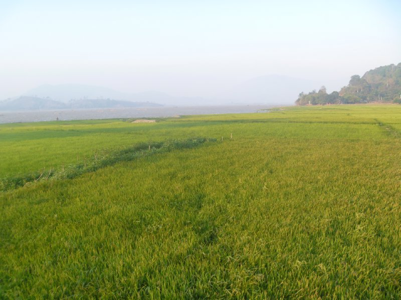 large_33_rice_fields.jpg