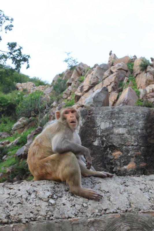 large_3_monkey_sitting.jpg