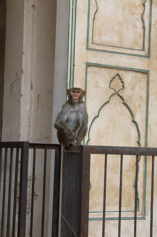 large_4_monkey_temple.jpg