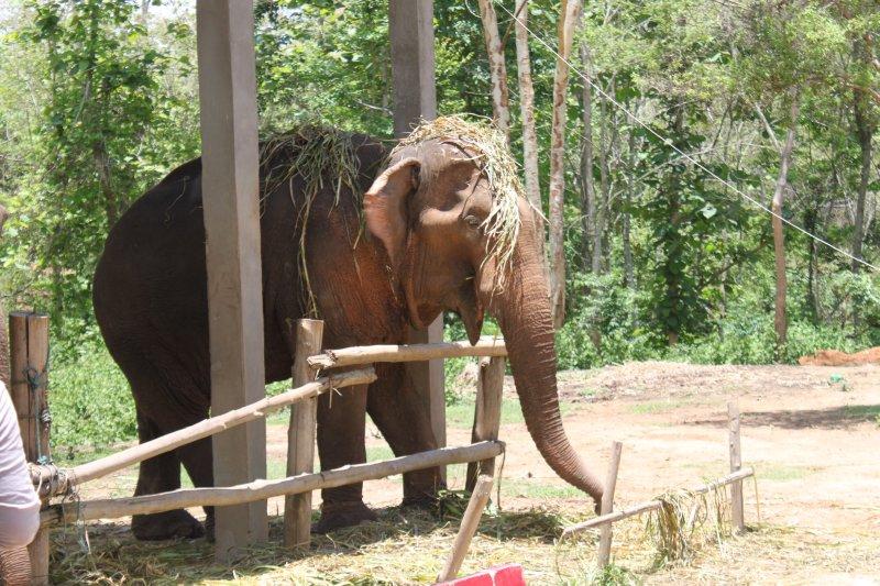 large_Elephant_playing.jpg