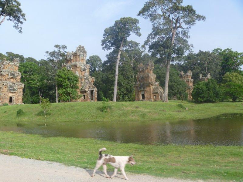 large_dog_enjoying_temples.jpg