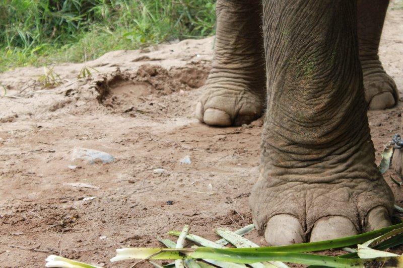 large_elephant_feet.jpg