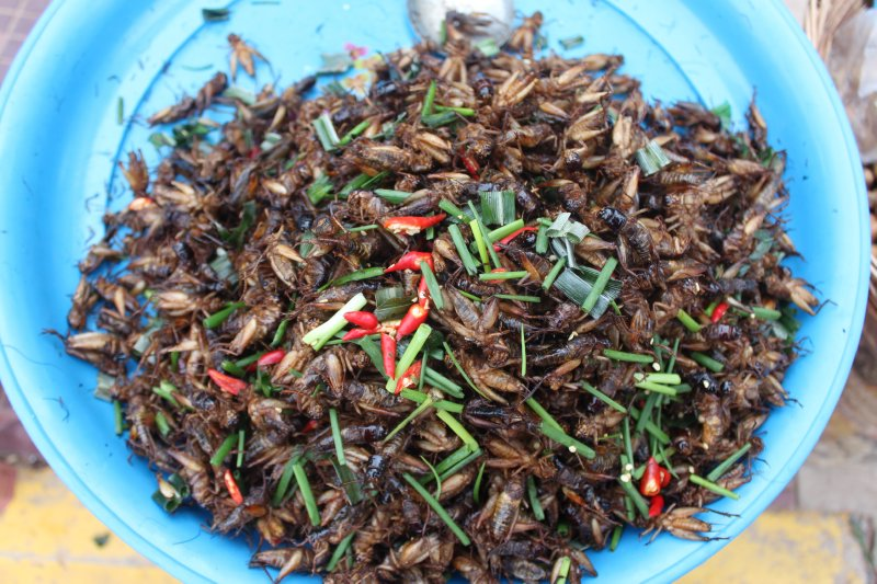 large_khmer_crickets.jpg