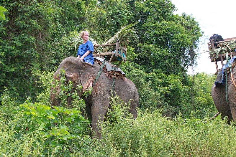large_kirby_elephant__walk.jpg