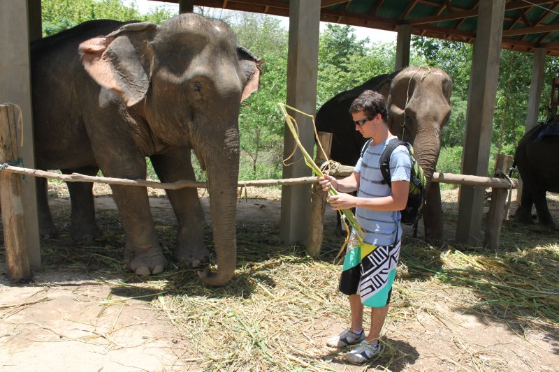 large_kyle_elephant_feeding.jpg