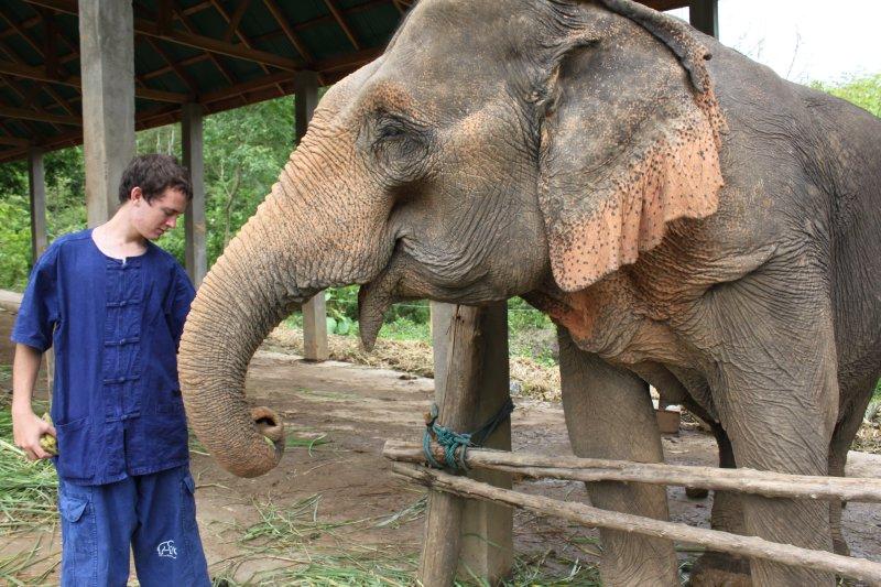 large_kyle_elephant_pat.jpg